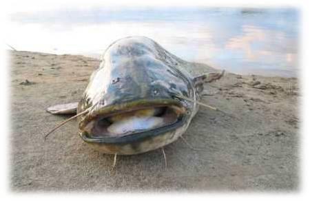 прикормка летней рыбалки