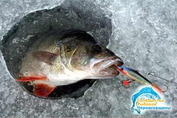 когда клюет рыба в зимнее время