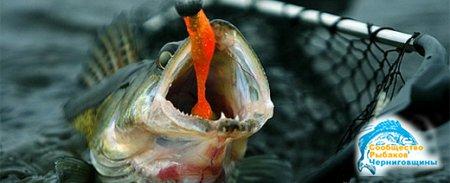 рыболовы чернигова