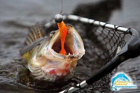 Наживки для ловли рыбы