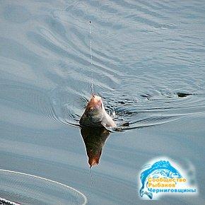 Рыболовный подсачек — древнейшее изобретение человечества