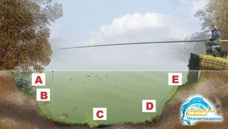 Рыбалка с берега: анатомия канала для любителей поплавочной удочки