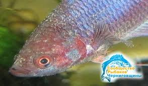 Болезни, передаваемые рыбами