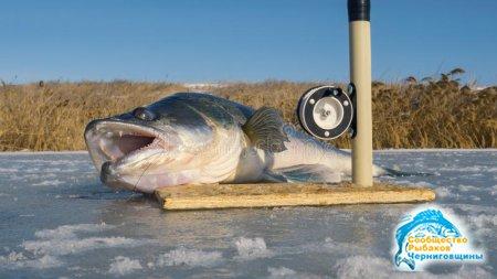 По рыбе и снасть