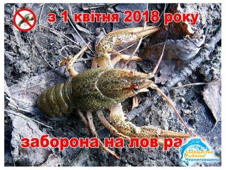 З 1 квітня у водоймах Чернігівщини заборонено вилов раків