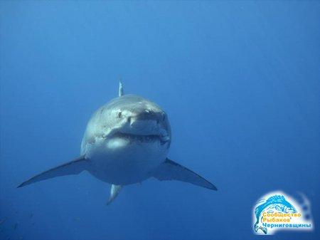 Охота на белую акулу, или рыбалка для миллионеров