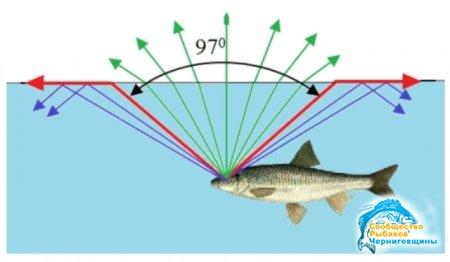 Зрение рыбы