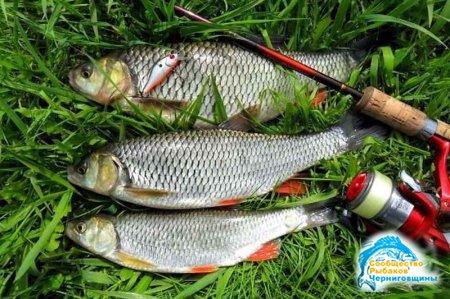 Азартная рыбалка. Ловля голавля