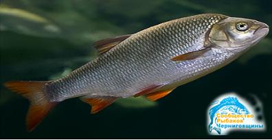 Какую рыбу лучше всего ловить осенью