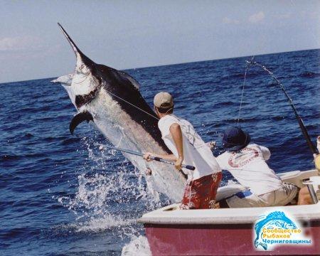Рыбалка на Мальдивах