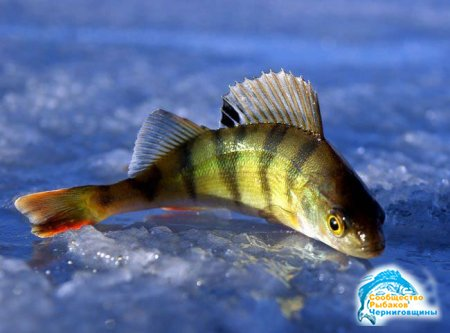 На что клюёт рыба?