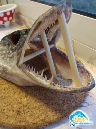 Сувениры из рыбацких трофеев — чучело рыбьей головы и рака
