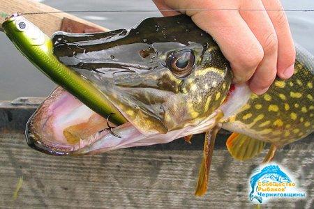 Какую рыбу и чем ловят в октябре?