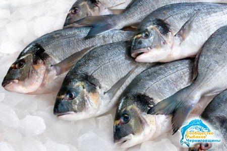 Как сохранить рыбу на рыбалке