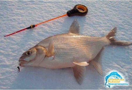 Зимняя рыбалка. Как правильно выбрать мормышку.