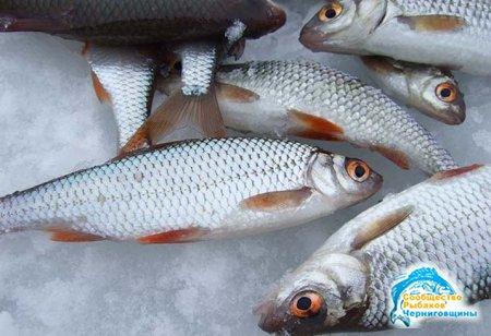 Особенности рыбной ловли на плотву
